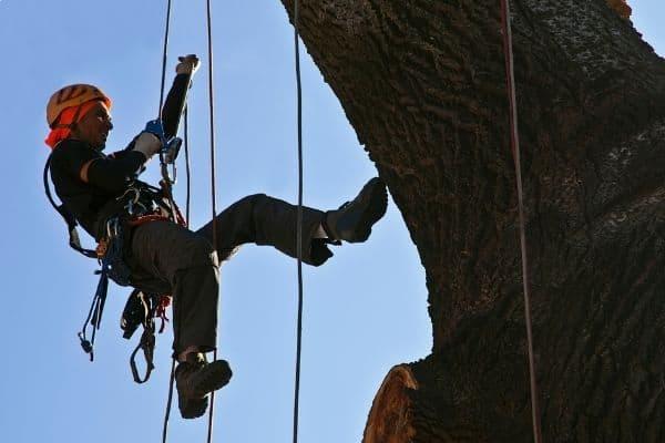 man on tree climbing