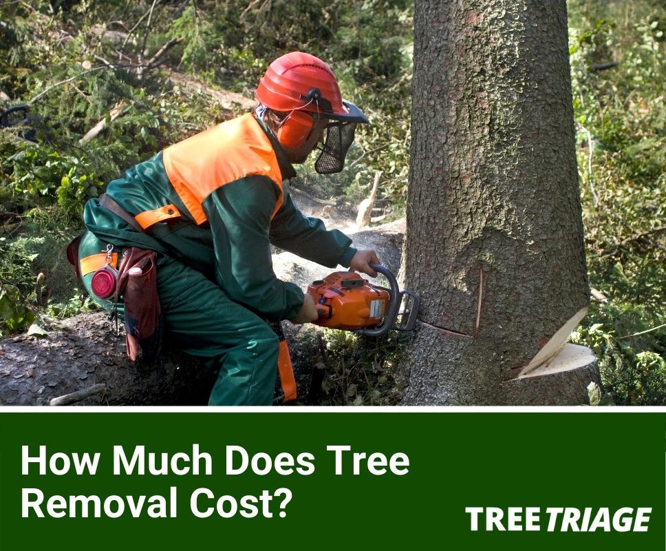 Tree removal cost guide