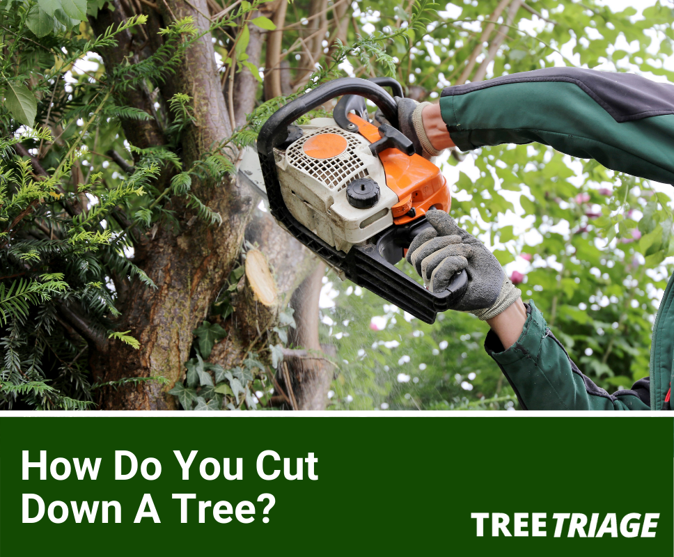How Do You Cut Down A Tree?