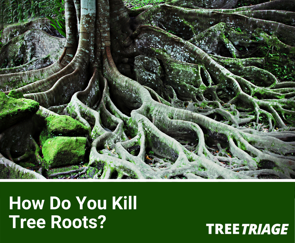 How Do You Kill A Tree's Roots?
