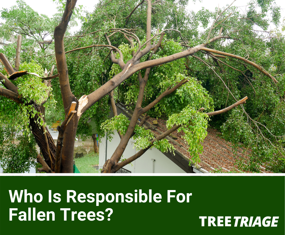 Who Is Responsible For Tree Removal?