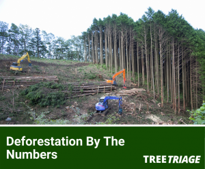 Deforestation By The Numbers
