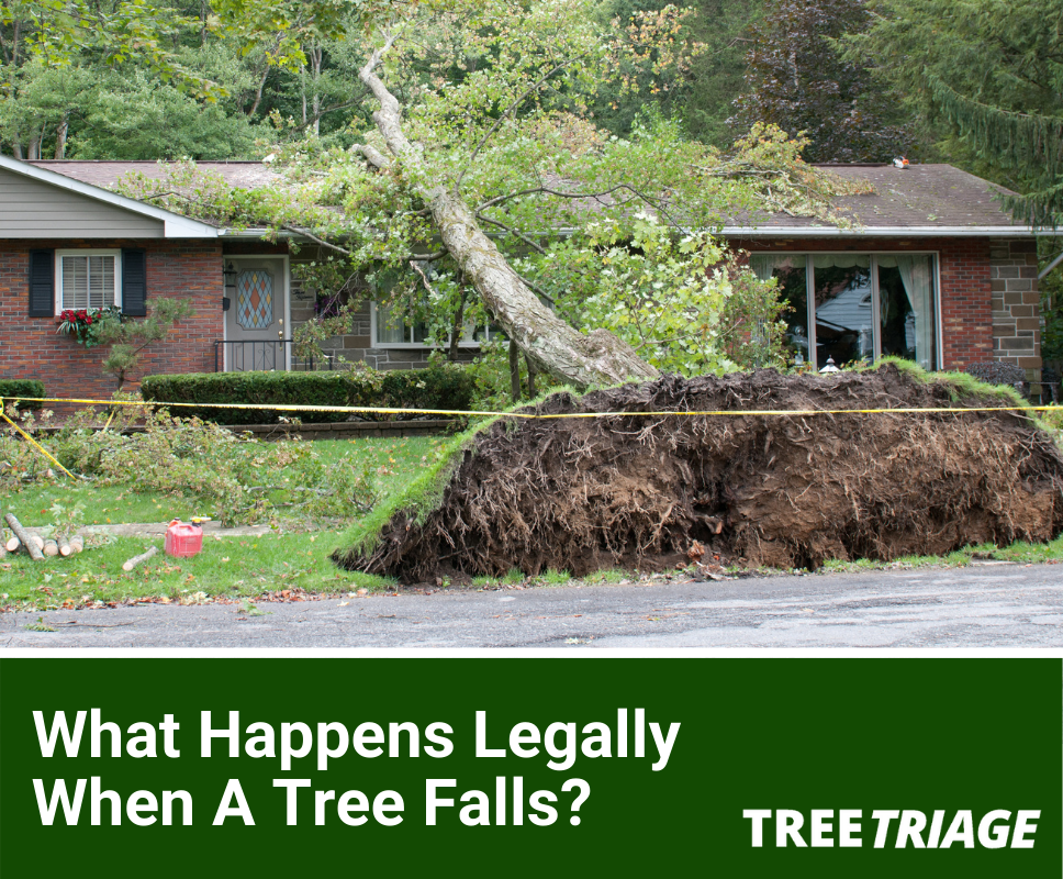 What Happens Legally if a Tree Damages My Property?