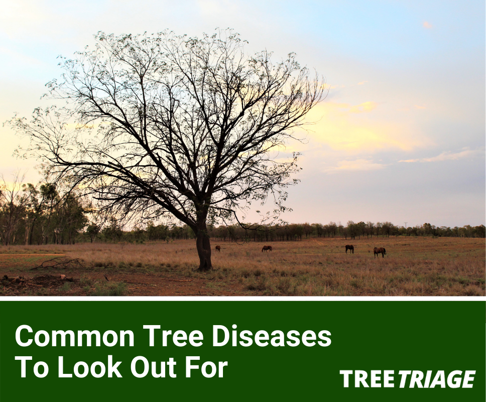 Identifying and Treating Common Tree Diseases