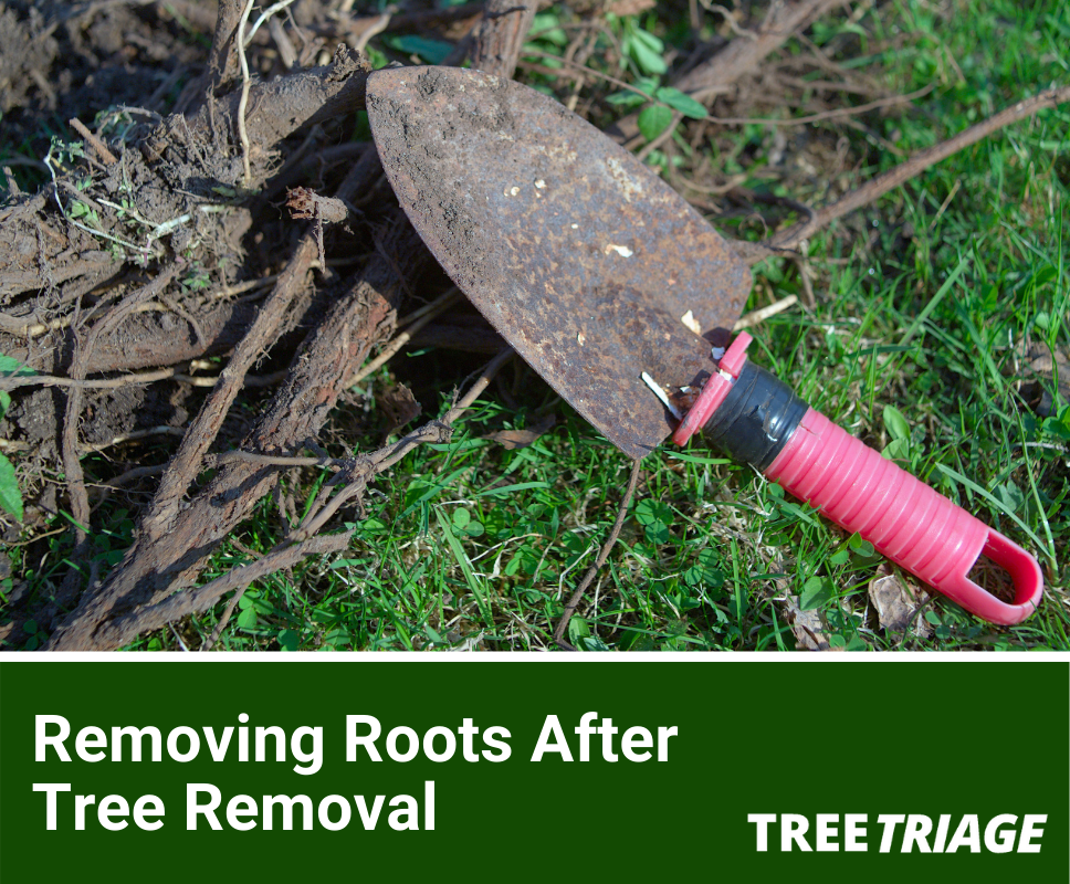 Removing Roots After Tree Removal