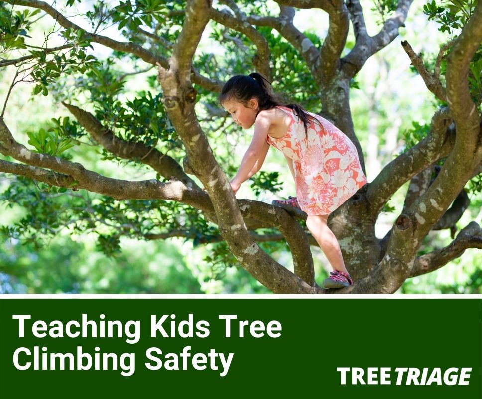 tree climbing safety for kids
