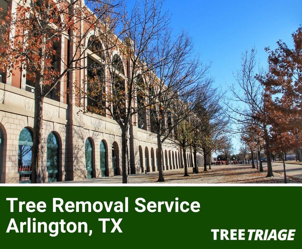 Tree Removal Service Arlington, TX-1