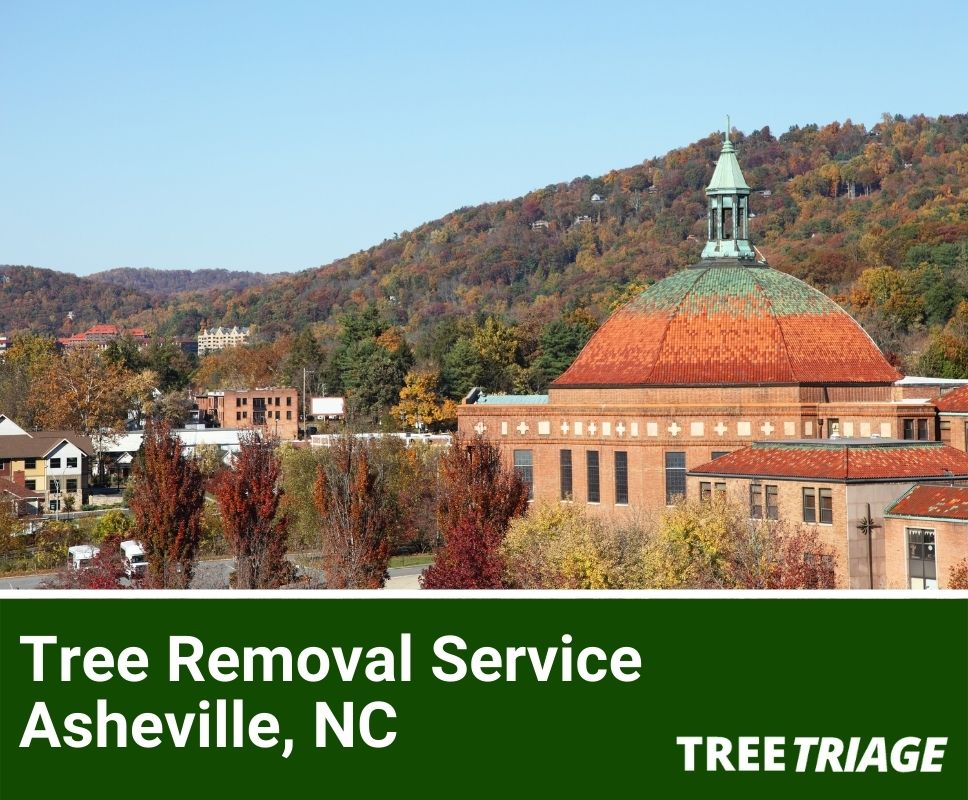 Tree Removal Service Asheville, NC-1