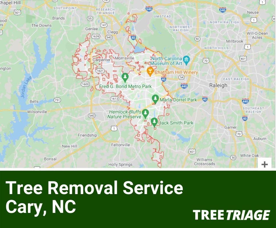 Tree Removal Service Cary, NC-1