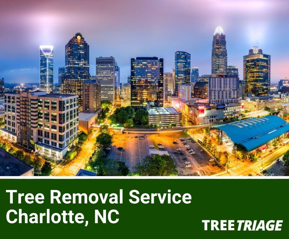 Tree Removal Service Charlotte, NC-1