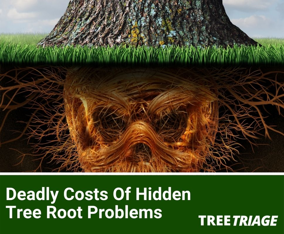Deadly Costs Of Hidden Tree Root Problems