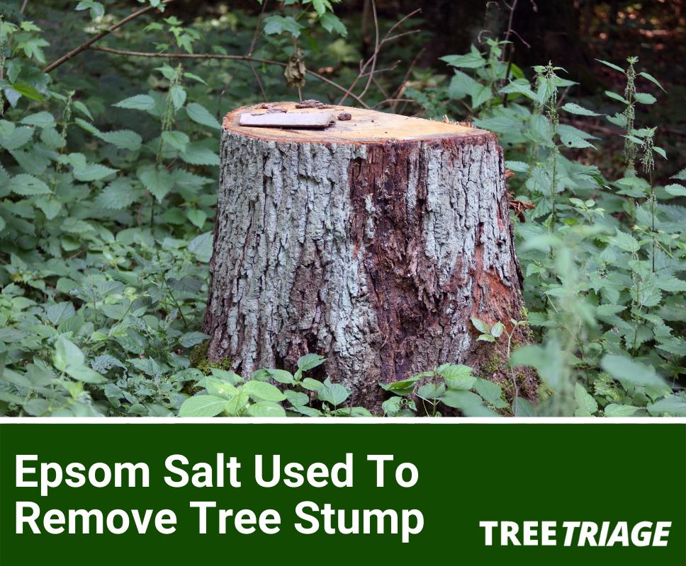 Epsom Salt Used To Remove Tree Stump