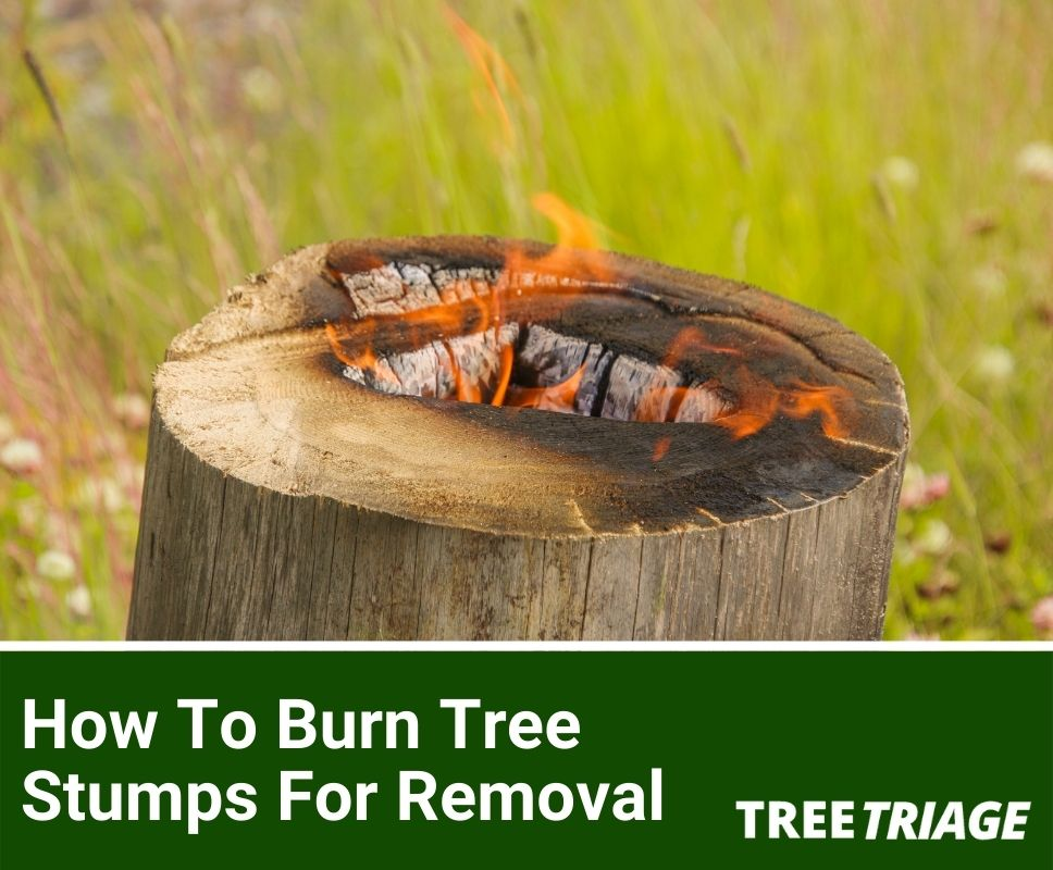 How To Burn Tree Stumps For Removal