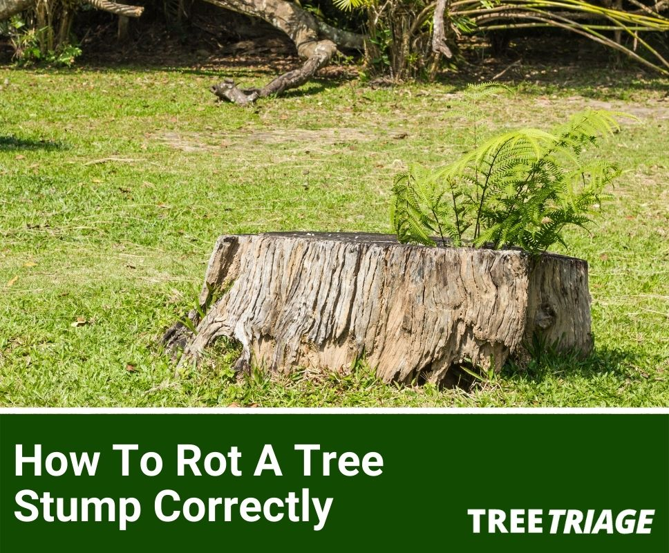 How To Rot A Tree Stump Correctly