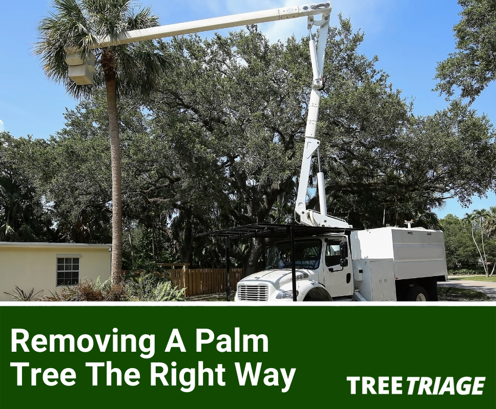 Removing A Palm Tree The Right Way