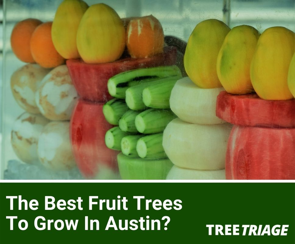 The Best Fruit Trees To Grow In Austin