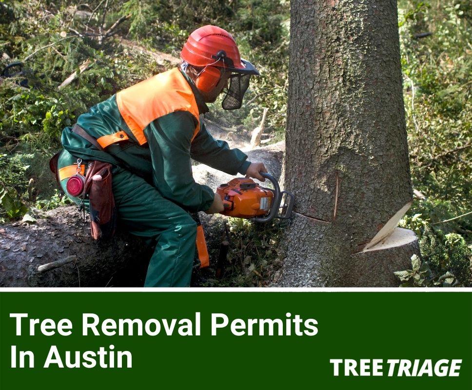 Tree Removal Permits In Austin