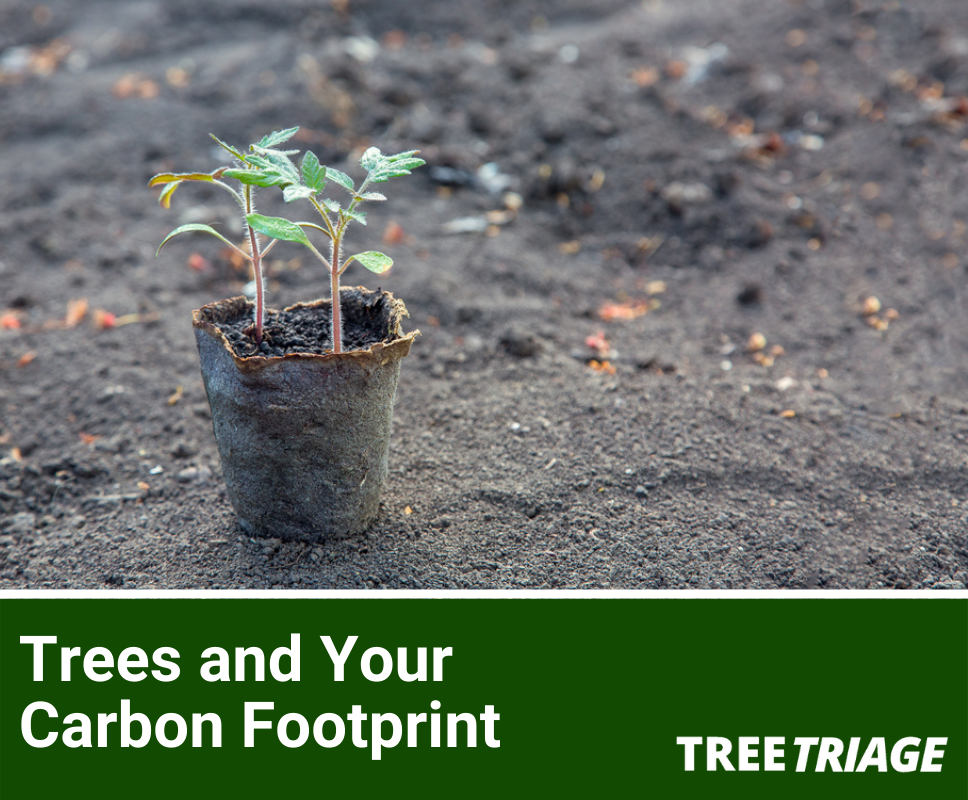 Everything You Need to Know About Trees and Offsetting Your Carbon Footprint
