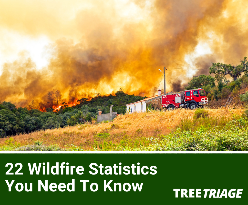 22+ Statistics and Facts You Need to Know About Wildfires