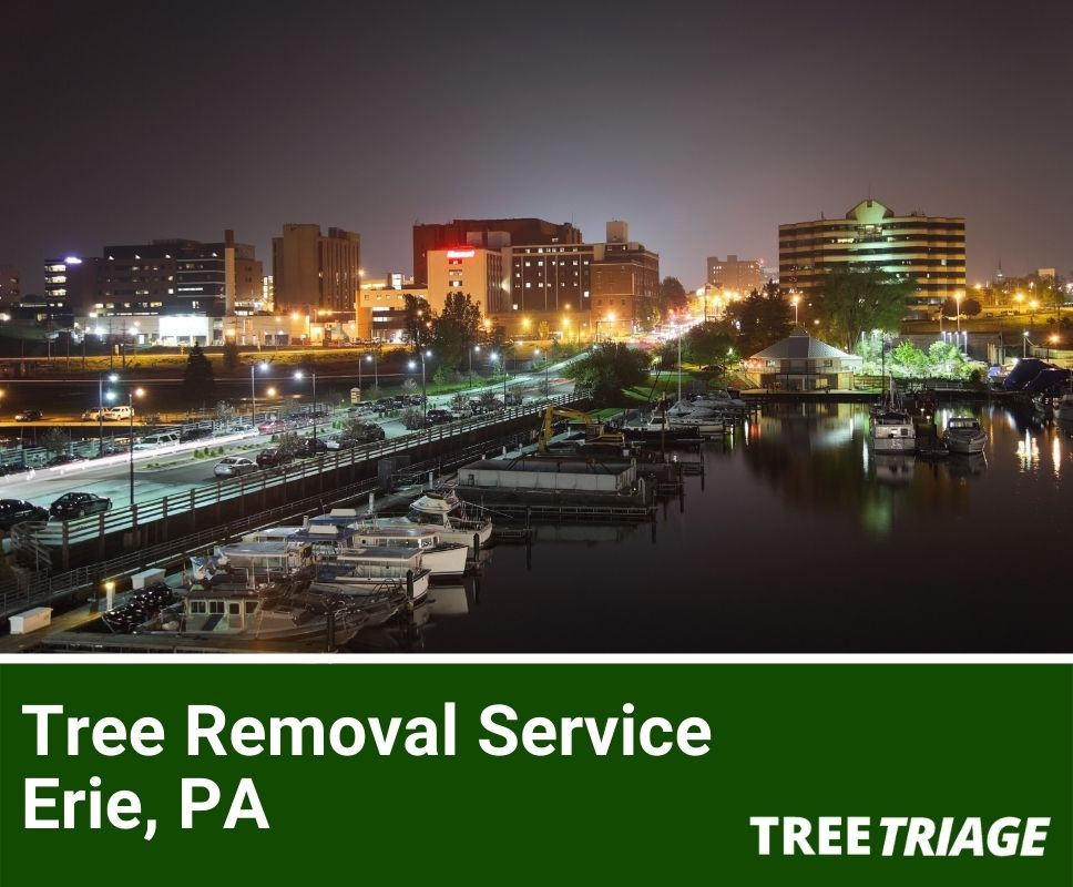 Tree Removal Service Erie, PA-1