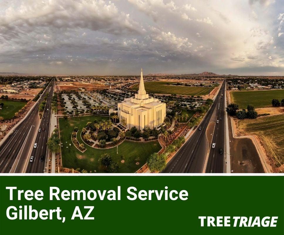 Tree Removal Service Gilbert, AZ-1