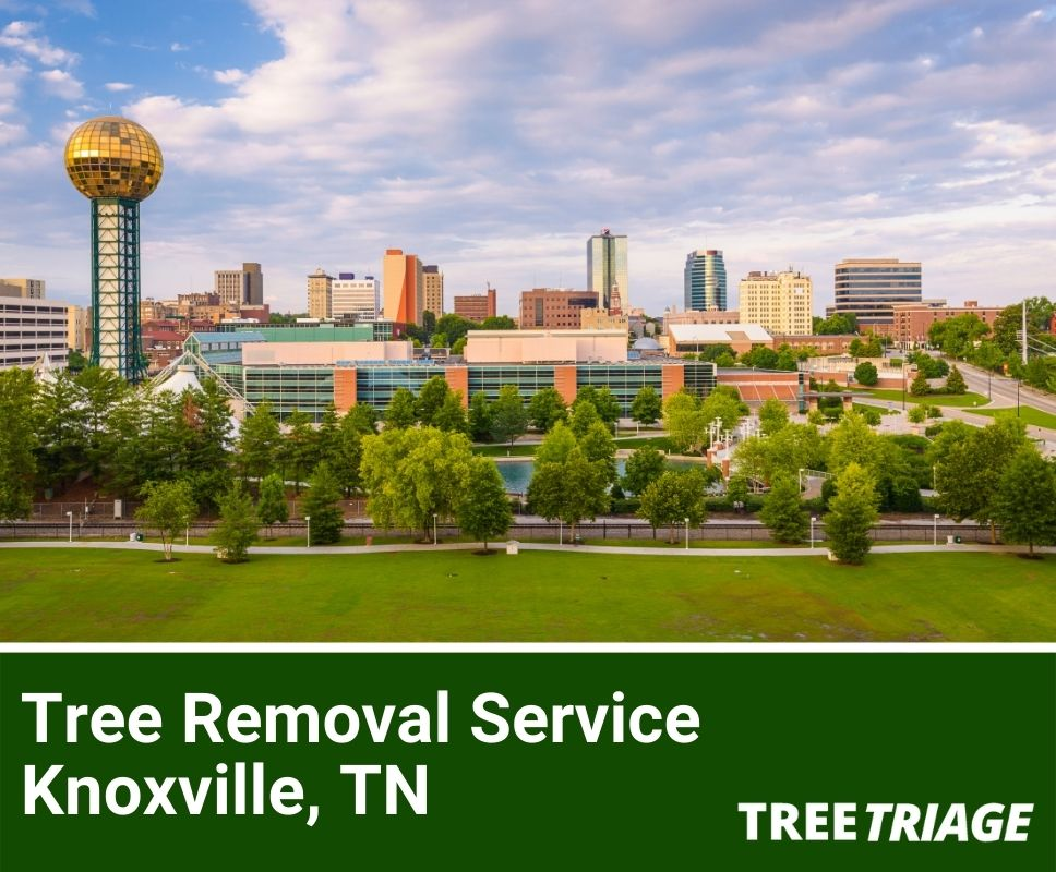 Tree Removal Service Knoxville, TN-1