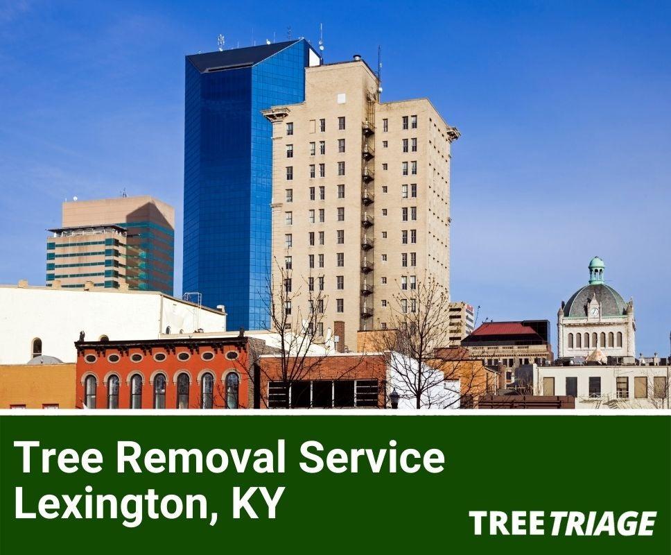 Tree Removal Service Lexington, KY-1