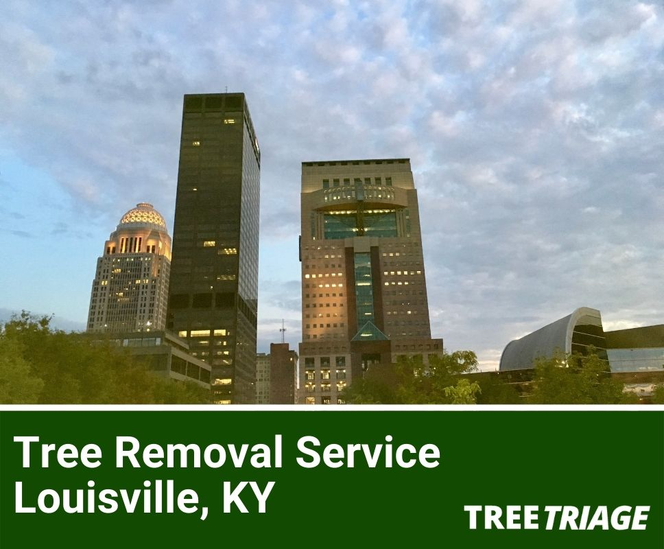 Tree Removal Service Louisville, KY-1(1)