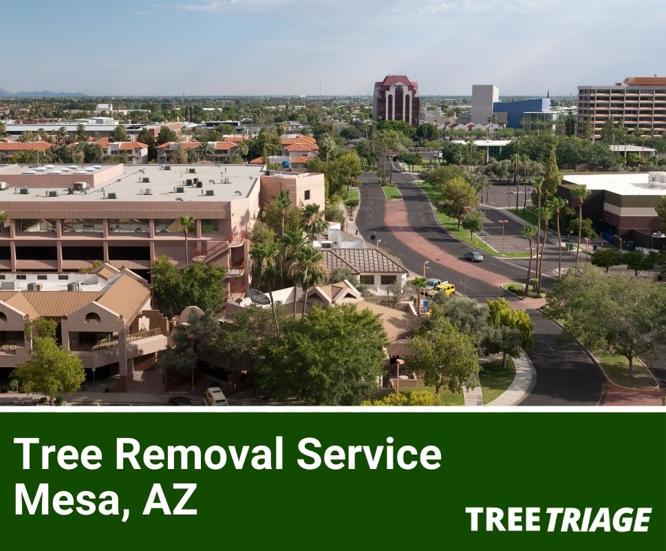 Tree Removal Service Mesa, AZ-1
