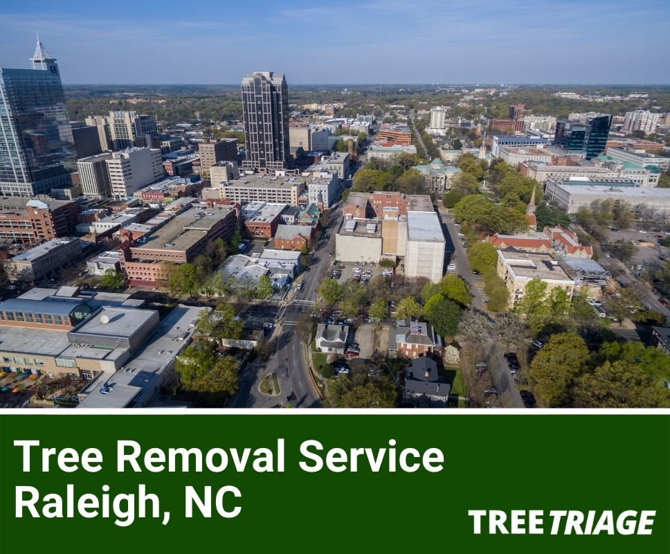 Tree Removal Service Raleigh, NC-1