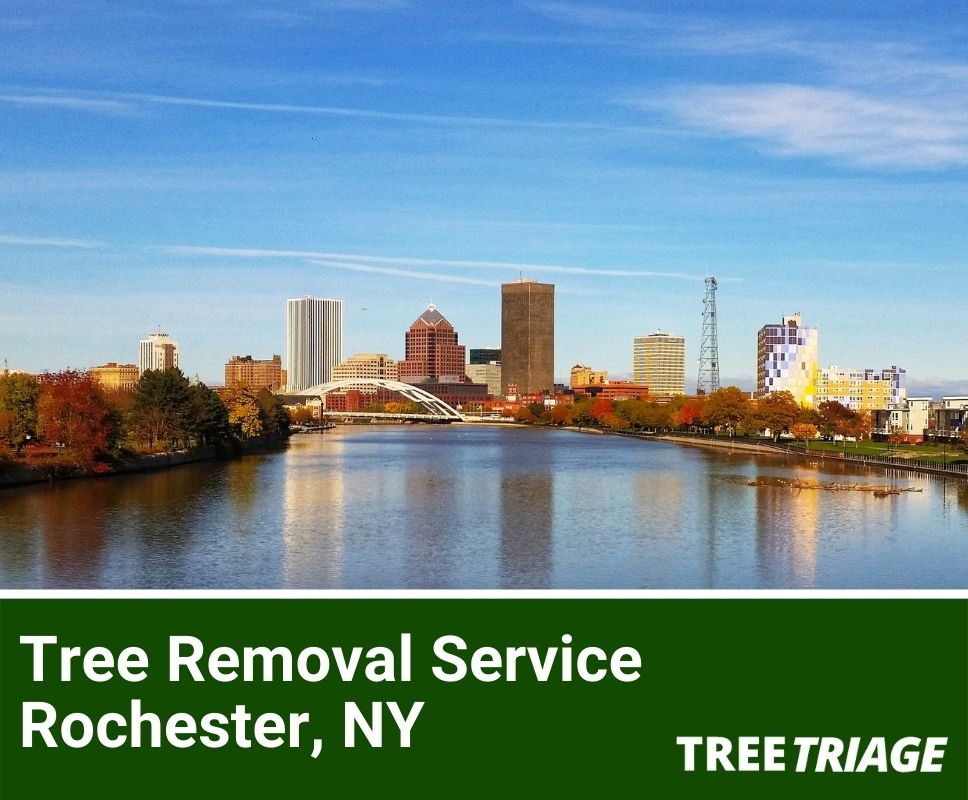 Tree Removal Service Rochester, NY-1