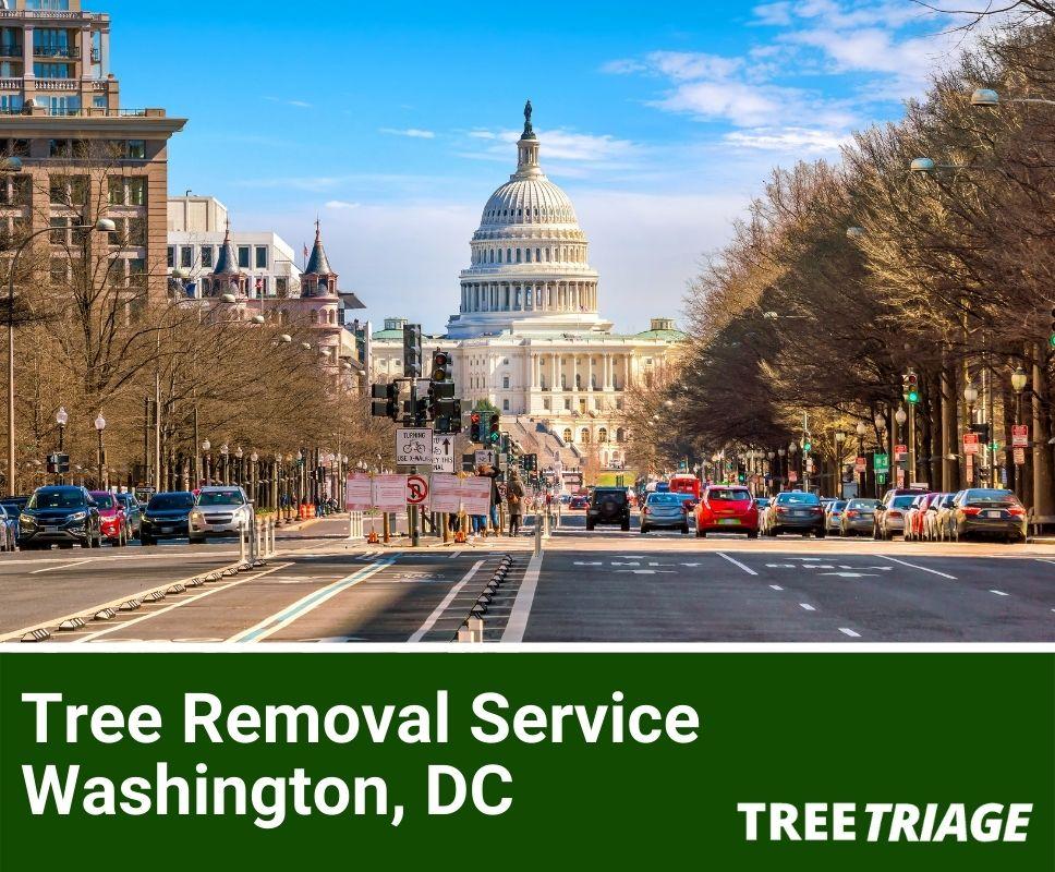 Tree Removal Service Washington, DC-1