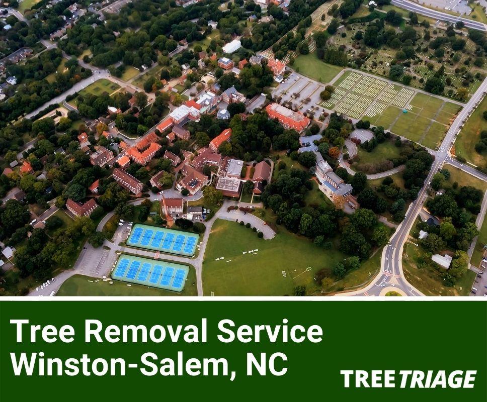Tree Removal Service Winston-Salem, NC-1