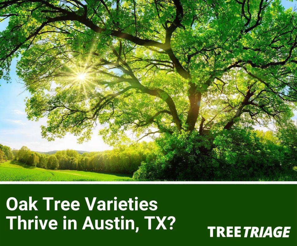 Which Oak Tree Varieties Thrive in Austin, Texas