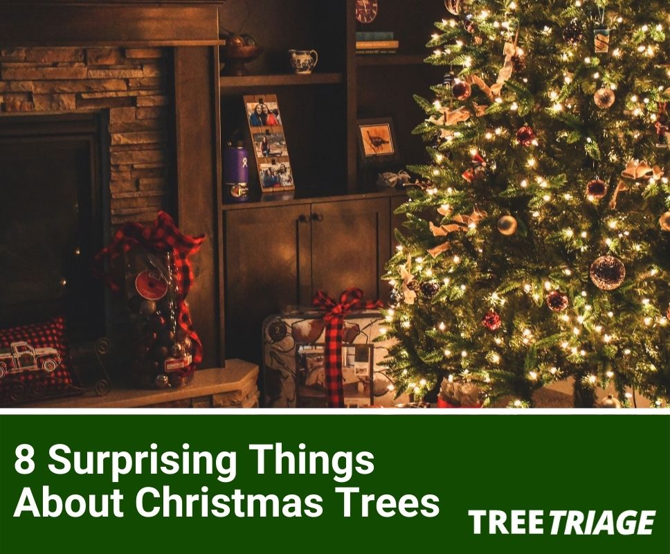 8 Surprising Things About Christmas Trees