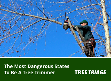 Most Dangerous States To Be A Tree Trimmer-F
